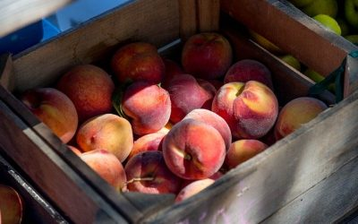 July 2020 – Jersey Peach Harvest Has Started
